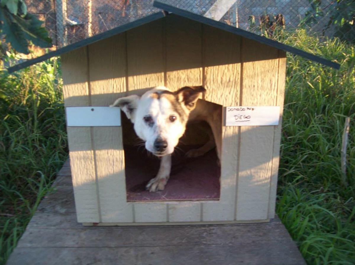 A dog in his wooden house at APA El Refugio Montevideo, Uruguay