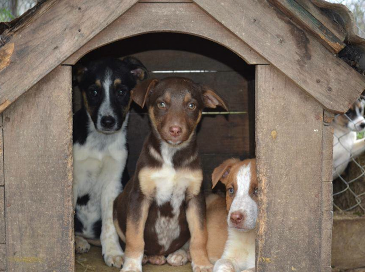 Three dogs in a wooden house at APA El Refugio Montevideo, Uruguay