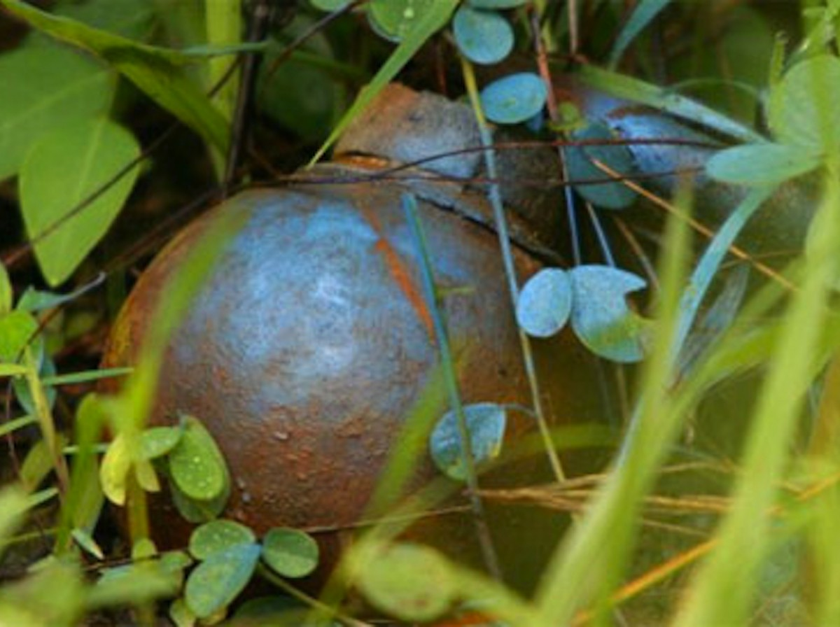Cluster bomb partially hidden in long grass in Laos